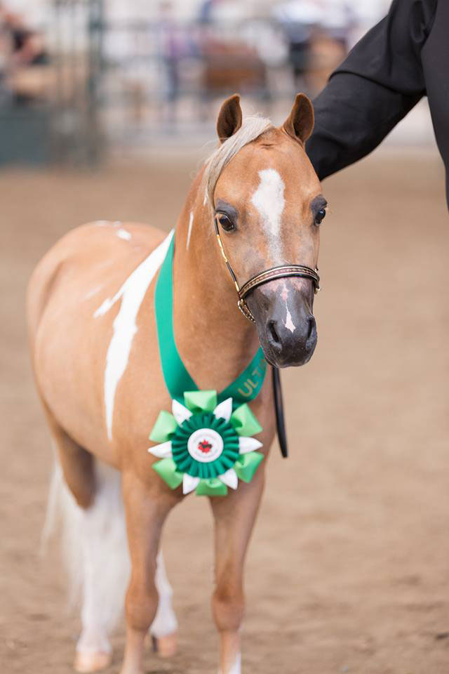Horse with ribbon